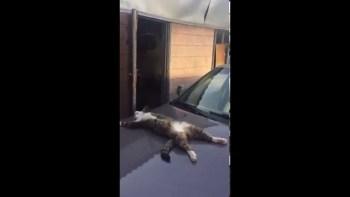 百獣の王「猫」の完全に安心しきって寝ている姿に私たち人間は抗う余地がない