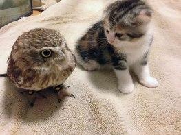 kitten-owl-best-friends-fuku-marimo-hukulou-coffee-japan-42