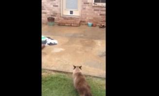 Epic Cat Door Fail   YouTube