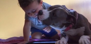 This Sweet Pit Bull Wants His Brother To Quit The Technology And Give Him A Kiss