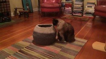 thumb-壺型のキャットハウスから飛び出す仔猫!-勢いよく飛び出すも・・・