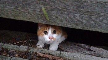 猫が脱走し帰ってこない。でも雨が降ってくると…