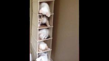 thumb-猫マンションは大騒ぎ!5匹の住人が大暴れ!