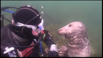 Gary and the seal in the Scilly Isles   YouTube