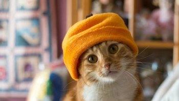 thumb-帽子をかぶったお洒落な猫たち。どの子が1番かわいい?
