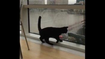 黒猫と窓ふきおじさんの仲良し風景にほっこり