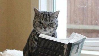 thumb-本好きのみなさんへ。読書が好きな猫たちはいかが?