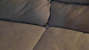 thumb-なぜネコは狭いところに入りたがるのか・・・。ソファに潜り込むネコ