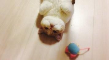 生まれて初めて床暖房を味わった猫の表情wwwwwwwww ハムスター速報