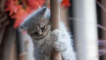 どんな瞬間でも猫はかわいい!?-思わずシャッターを切った写真!