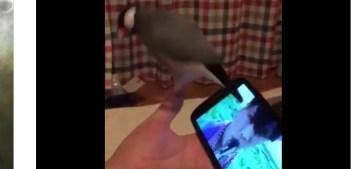 きくさんさんはTwitterを使っています   文鳥にサカナクション聴かせてみた結果がコチラwwwwww  サカナクション  buncho https   t.co o30WT6XrY6