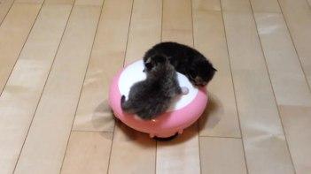 thumb-掃除機ロボットの上で遊ぶ子猫。滑って落ちても安心!だって優しく見守る家族がたくさんいるもの