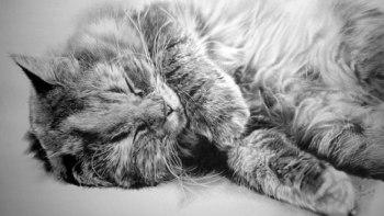thumb-この15枚のネコ画像にはある秘密があります。ネコ好きのみなさんなら分かりますよね!