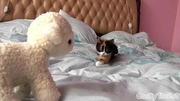 thumb-怪しいやつ!-恐る恐るヌイグルミに近づく子猫、生き物じゃない事に気づき・・・