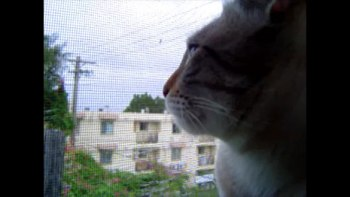 ニワトリの鳴き真似がとっても上手なネコにビックリ!