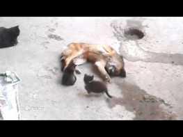 『ママは猫、パパは犬』 心温まる動物たちの触れ合いの動画に胸がキュンとなる