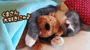 クマのヌイグルミが大好き!-クマのヌイグルミなしじゃ眠れないねこ