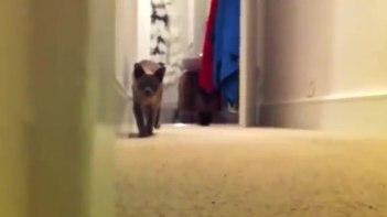 ちょっと怖い!?-ネコとダルマさんが転んだで遊んでると・・・