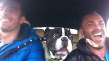 とっても幸せそう!ドライブ中に仲良しな2人と1匹が歌う動画に胸が熱くなる