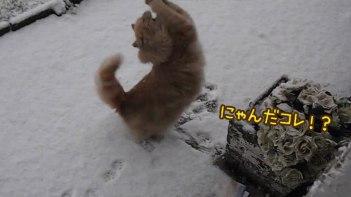 【コタツで丸くならない】雪を初めて見たネコの反応がとってもカワイイ!テンション上げ上げで大はしゃぎ!