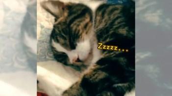 とっても寝顔が可愛いネコさん。撫でて起こすととんでもない表情で激怒!