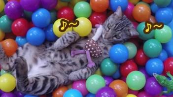 大好きなボールがいっぱい♥-夢中になってボールプールで遊ぶネコ
