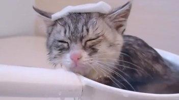 初めてのお風呂♪温かくて気持ちよさそうにくつろぐネコちゃん
