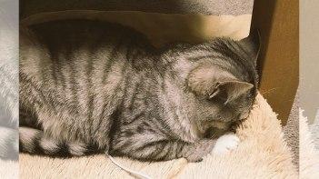 電源を入れ忘れた猫用のホットカーペットの上で寒くて丸くなるネコ…電源を付けると…