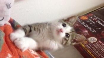 何を見つけたの!?-とっても可愛い子ネコさん。じ〜っと見つめる姿にキュン♥