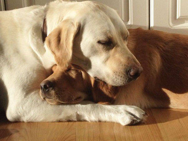 doggies_who_are_friends_are_too_cute_not_to_smile_640_10
