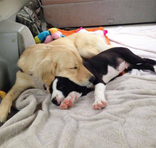 doggies_who_are_friends_are_too_cute_not_to_smile_640_13