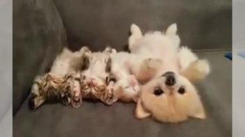 動いたら起きちゃう!仲良しの子ネコたちが隣で寝ているので動かずにいる優しいワンちゃん!
