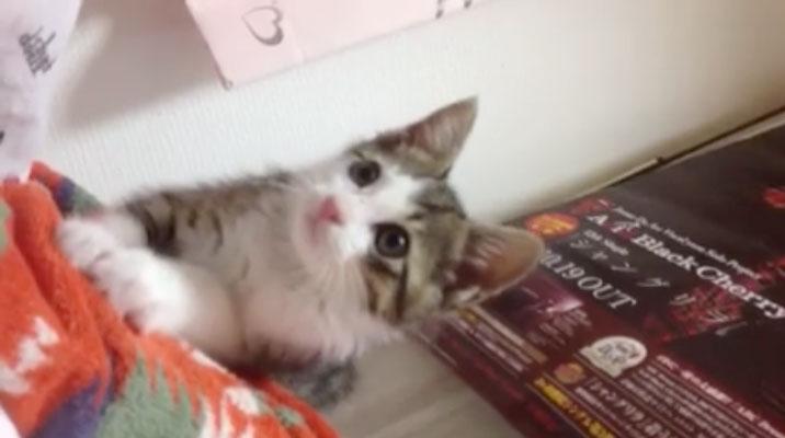 01何を見つけたの!?-とっても可愛い子ネコさん。じ〜っと見つめる姿にキュン♥