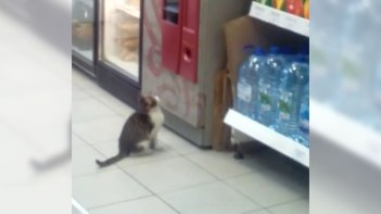自動販売機の前にネコさん。ネコも人間じみた「あの行動」をやってしまう笑撃の映像