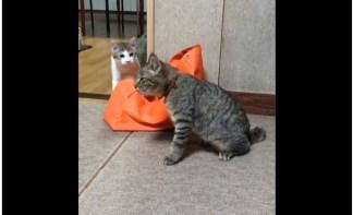 モモ姉さんさんはTwitterを使っています   くしゃみの止まらない兄ネコと心配してるっぽい弟ネコ https   t.co 9lUi8HxBUl