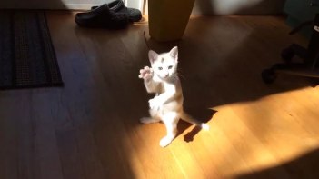 ここに!ここに何かいるの!!頑張って日差しと戦うネコさん