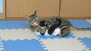 あんたはホンマに可愛いなぁ。孫を溺愛するのはネコさんも同じなんですね!