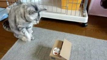 にゃ〜ん!ボタンを押すと猫の手が出てくる貯金箱で一人遊びするネコさん