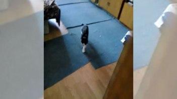 ネコさんをこっそりビデオ撮影していたら…気づかれて