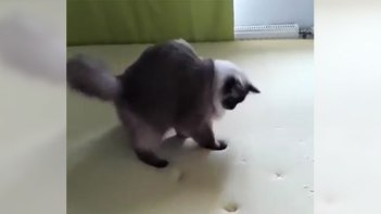 にゃんだこれ!?-低反発マットに残る自分の足跡に翻弄されるネコさん