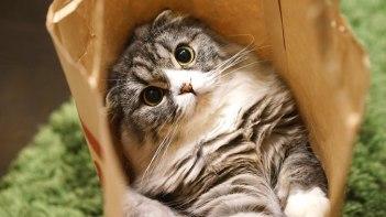 猫の写真を上手に撮りたい!そんな時に役立つちょっとしたコツ10選!