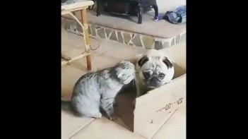全ての箱はネコのもの!譲っても譲っても箱を奪われるワンちゃん