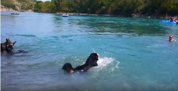 Dog leaning to swim paddles in hilarious fashion   YouTube