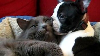 仲良しすぎ!ワンちゃんとネコさんのラブラブっぷりにホッコリが止まらない!