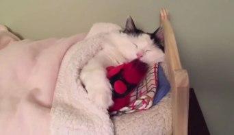 04小さなベッドでぐっすり眠るネコさんに癒される