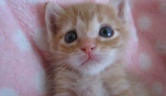 「まさに天使そのもの♪」子ネコさんのうるうるした瞳にココロを奪われる♥