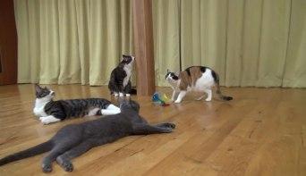 たいへんだぁー(゜□゜)Σ!!雷にびっくりしたネコさんが驚くべき瞬発力で逃げていく!!