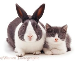 brother-from-another-mother-similar-animals-4-5786298fd9a61__605