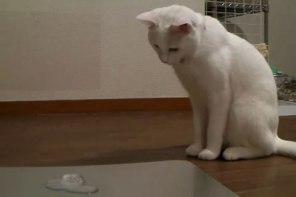 「にゃんだこれは??」はじめて氷をみたネコさんの摩訶不思議な対応がおもしろい♪
