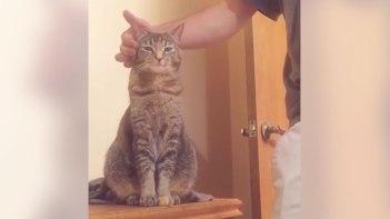 ネコさんに反対側から「トントン」とやってみたらとっても可愛いリアクションが!